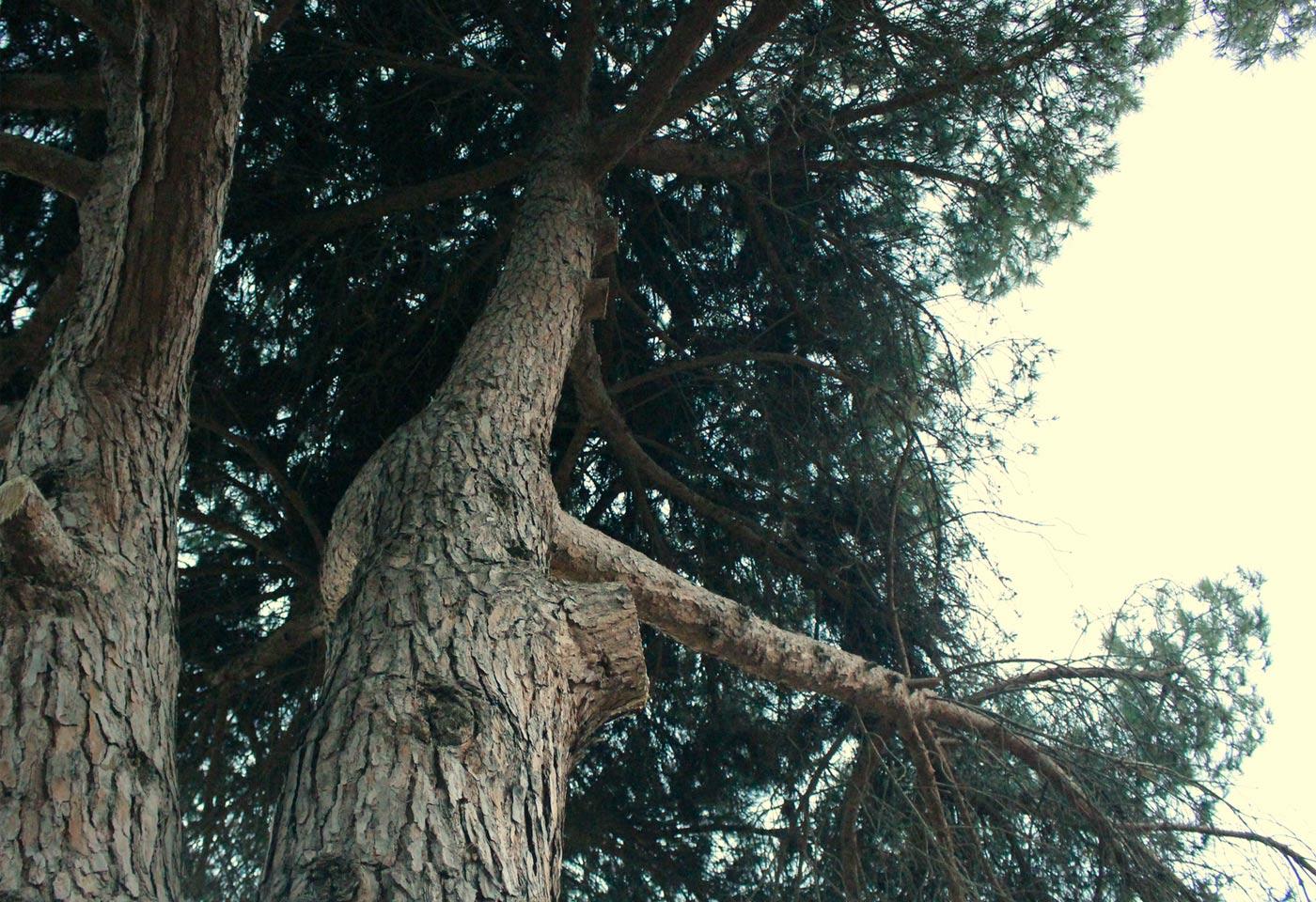INSPIRATION 7_Paseo por bosque mediterráneo