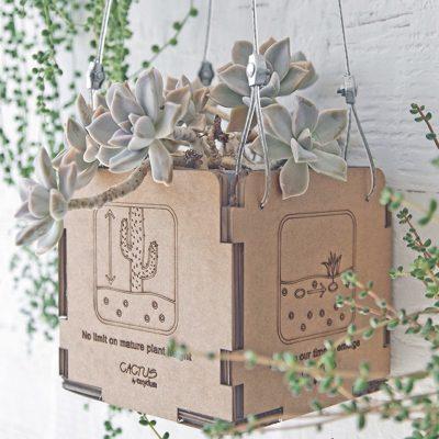 Packaging Oxydum